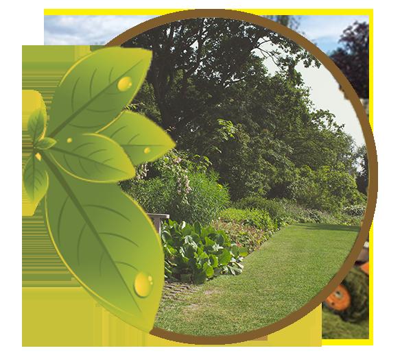l arbre d ornement linselles lagage et soin de l arbre autour de lille. Black Bedroom Furniture Sets. Home Design Ideas